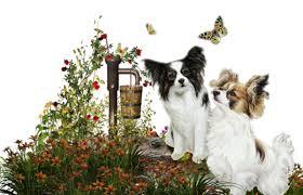 """Résultat de recherche d'images pour """"bonne journée avec chiens"""""""