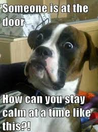Worried Dog Meme | Funny Pictures, Quotes, Memes, Jokes via Relatably.com