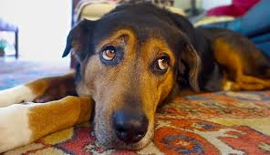 10 Products To Keep Your <b>Dog</b> From Getting Lonely