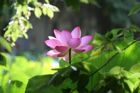 <b>Purple Lotus</b> Counseling