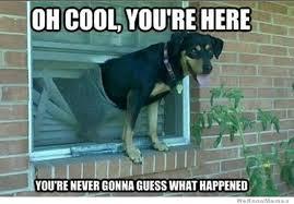 25 Funny Dog Memes | WeKnowMemes via Relatably.com