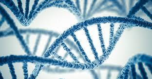Image result for genetics