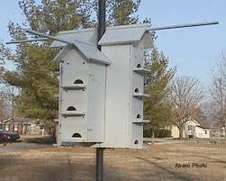 Facts about Purple MartinsIf you wish to build them a house that is a little simpler  then there is an entire heading devoted just for purple martin housing on my Links Page