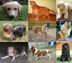 <b>Dog</b> - Wikipedia