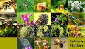 essay on biodiversity in hindi   essay topicsescalating scourge of biodiversity degeneration conservation is the need hour