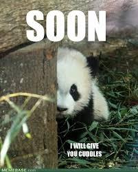 Hello Pandaaaa~ - Hellos & Goodbyes - DreamerRO's Community via Relatably.com