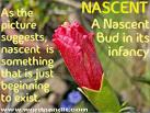 Images & Illustrations of nascent