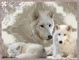 """Résultat de recherche d'images pour """"gifs de loups blancs"""""""