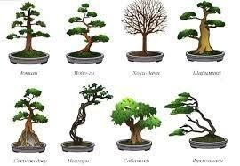 Картинки по запросу как посадить шиповник <b>бонсай</b> | Сады в ...