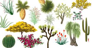 California desert <b>plants</b>: An illustrated guide - Curbed LA