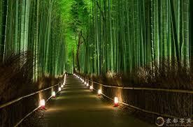 Резултат слика за sagano bamboo forest