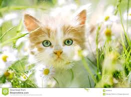 Image result for cute cats with green eyes