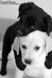 Image result for ebony and ivory racial harmony images