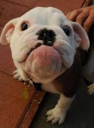 Image result for dogs smiling