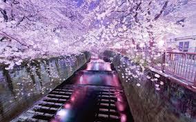 「目黒川 桜」の画像検索結果