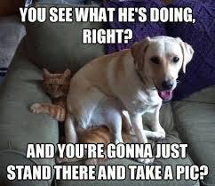 25 Funny Dog Memes: Part 3 - Dogtime via Relatably.com