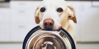 <b>Best</b> dog <b>food</b> in 2021