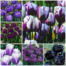 Popular Tulip Purple-Buy Cheap Tulip Purple <b>lots</b> from China Tulip ...