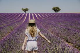 How to Visit the Provence <b>Lavender Fields</b> in Valensole, <b>France</b>