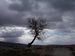 لكل محبي صور الطبيعة  اكبر تجميع لصور الطبيعة - صفحة 3 Images?q=tbn:ANd9GcRb3iO32ByKbsl4VfFpg1UZp9J7YW6l1C9se7xkq1YfniaYikrt