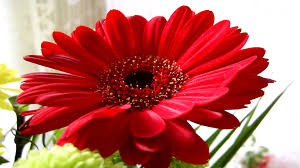 Image result for nature photos flowers