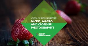 What is the Difference Between <b>Macro</b>, Micro and <b>Close</b>-<b>Up</b> ...