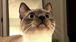 The Best Cute and <b>Funny Cat</b> Videos This Week! - YouTube