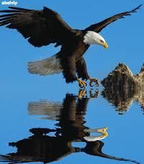 Resultado de imagen para águilas  aves