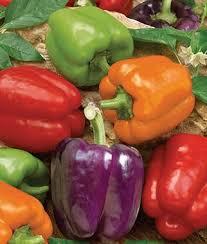 Pepper, <b>Sweet</b>, <b>Rainbow</b> Bell Blend - Burpee