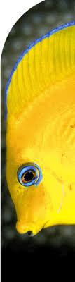 <b>Flower</b> Garden Banks National <b>Marine</b> Sanctuary <b>Sea Turtle</b> ...
