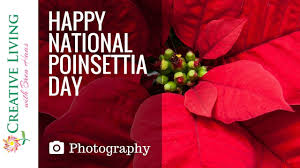 Happy National Poinsettia Day : Holiday Plant Photo Collection ...