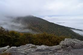 fog fall foliage potato chips puppy pics paradisemtnmusings where do you see yourself in 10 years i invite you to join me in giving the journey to our omnipotent tour guide and relaxing in the knowledge that he has