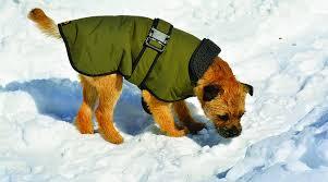 The Best <b>Dog Winter Coats</b> and <b>Jackets</b> - Whole <b>Dog</b> Journal