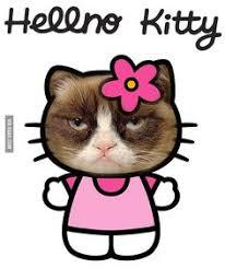 Cats on Pinterest   Grumpy Cat Meme, Grumpy Cat and Grumpy Cat Quotes via Relatably.com