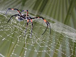 Resultado de imagen de Besos escritos teje la araña