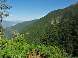 نتیجه تصویری برای جنگلهای هیرکانی
