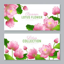 <b>Lotus Leaf</b> Vectors, Photos <b>and</b> PSD files   Free Download