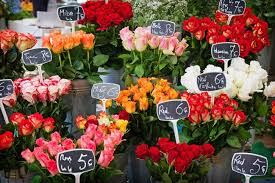 Exporting roses to <b>Europe</b> | CBI - Centre for the Promotion of Imports ...