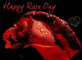 Image result for happy rose day