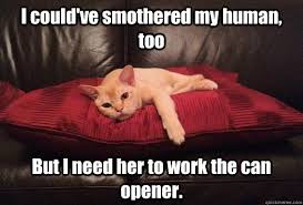 I could've smothered my human, too But I need her to work the can ... via Relatably.com