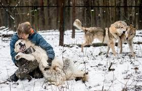 Аня и <b>волки</b> в подмосковном лесу - Общество - ТАСС
