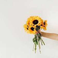 Women's Hand Hold <b>Yellow Sunflowers Bouquet On</b> White ...
