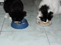 Отзыв о Влажный корм для кошек <b>Molina</b> | Крепкое здоровье и ...