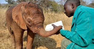<b>Elephant</b> Orphanage Project - Zambia | IFAW