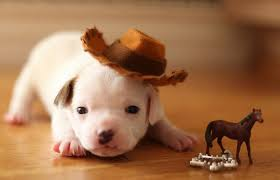 Image result for animals as cowboys