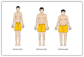 personality and behavior approaches and measurement sheldon s body types ectomorph mesomorph endomorph