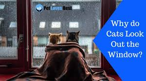 Why Do <b>Cats Look Out</b> the Window?   Mystery Revealed! - Pet Loves ...