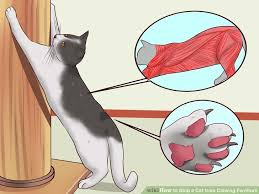 image titled stop a cat from clawing furniture step 1 cat safe furniture