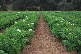 Image result for Regenerative Farming