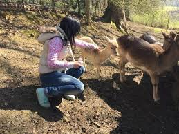 The <b>little baby deer</b>, hand feeding them all. - Picture of Prinknash ...